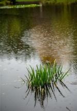140410googong garden weather-5339 copy