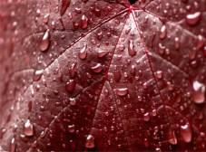 140410googong garden weather-5534 copy