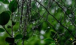 140410googong garden weather-5612 copy