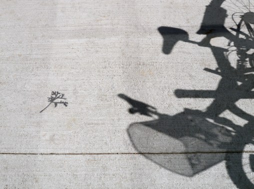 twig-no-leaf-bikeshadow