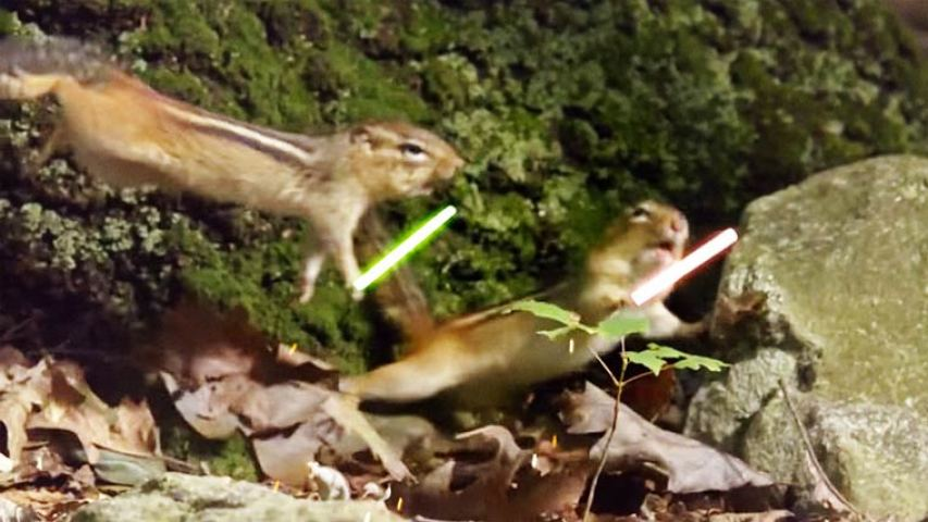 jedi chipmunks 2