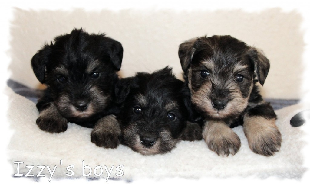 Izzys-boys-4-wks-3-1024x616 USED