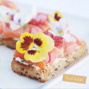 Saumon radis figues et mousse de coriandre cuisine clairesblog tartineshellip
