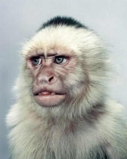 Jill Greenberg, The Monkey