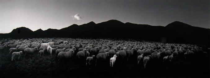 Pentti Sammallahti, Barun Khemchik, Tuva, Siberia (Flock of Sheep and Goat)