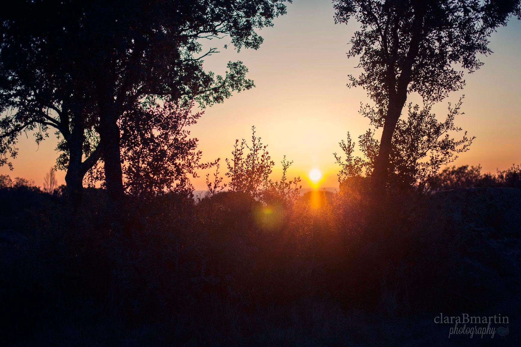 Despierta_fotoclaraBmartin14