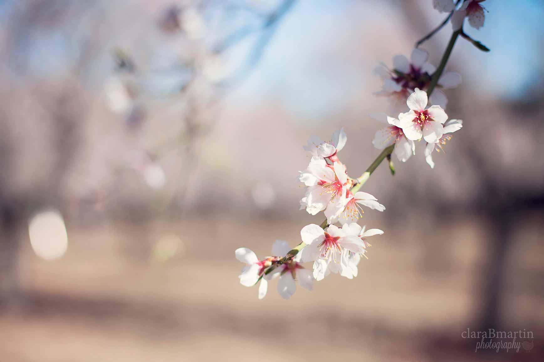 Primavera_claraBmartin01