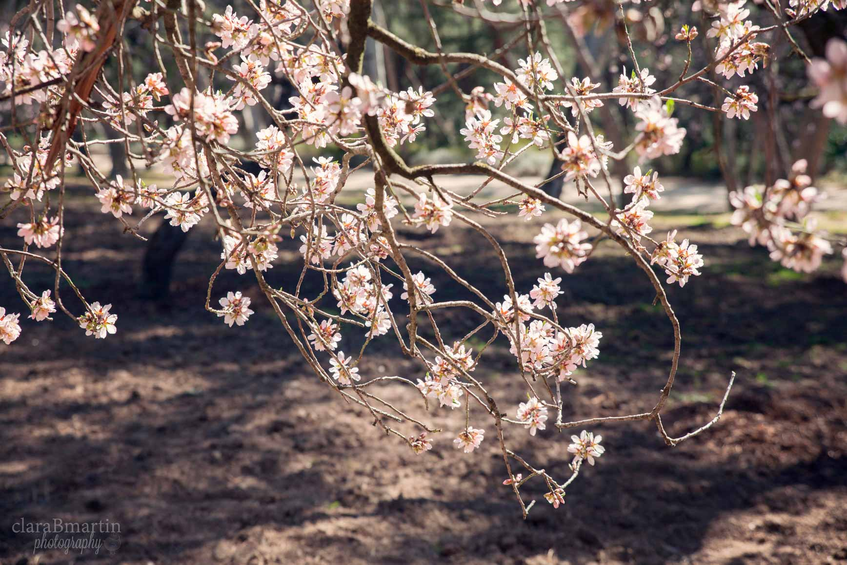 Primavera_claraBmartin11