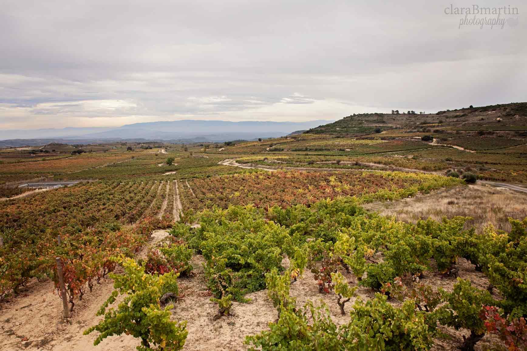 Rioja-claraBmartin-17