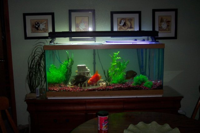 Aquarium 75 gallon | Idaho Lewiston | Items For Sale | deal Classified