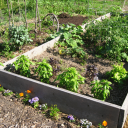 North End Community Garden – Volunteer Together!