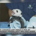 Peter Schiff: Keep the baby panda alive during government shutdown