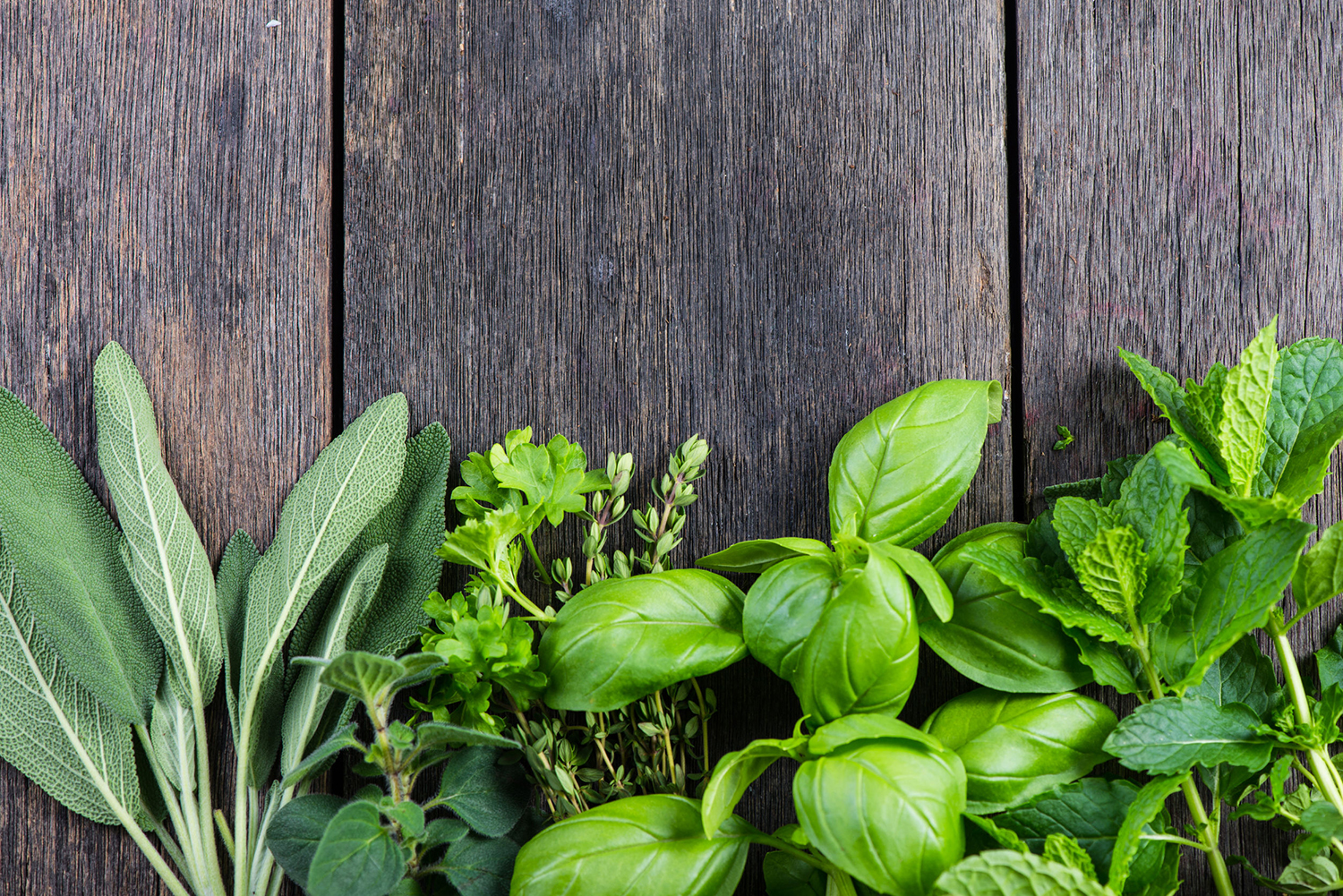 Peculiar How To Grow Herbs Spices S Clickhowto Growing Cilantro S Spices S How To Grow Herbs Containers S Winter Growing Cilantro houzz-03 Growing Cilantro Indoors