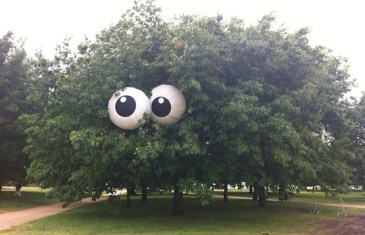 A Tree that Stares at You