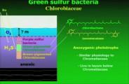 GreenSulfurBacteria