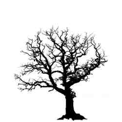 Small Crop Of Family Tree Picture