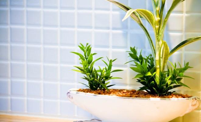 風呂 肺炎 お風呂 : 】観葉植物がヤバい。お風呂 ...