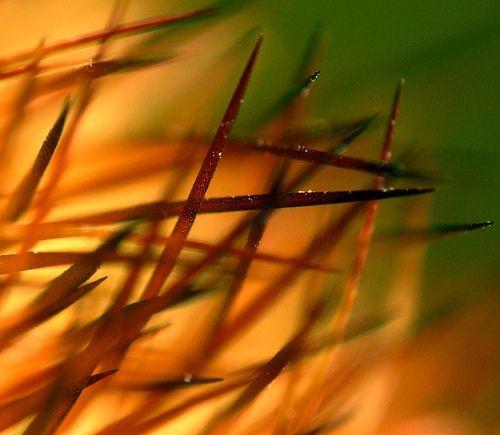 Cactus needle bokeh, por kevin dooley
