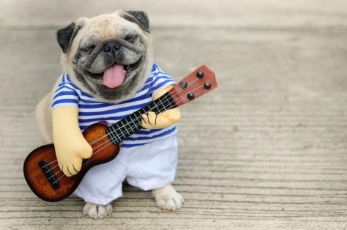Medium Of Soothing Dog Music