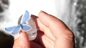 papillon-bleu-esprit-nat