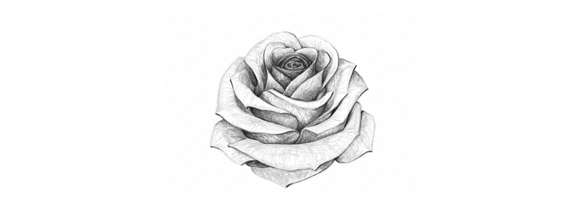 How to Draw a Rose Final product image