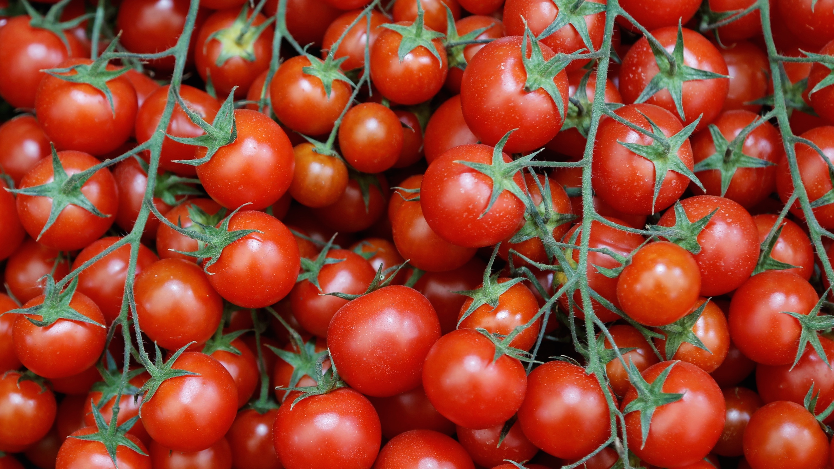 Classy A Desert Farm Is Growing Tomatoes On Seawater Solar Power Quartz Tomato Growers Supply Promo Code houzz-02 Tomato Growers Supply