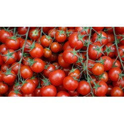 Small Crop Of Tomato Growers Supply