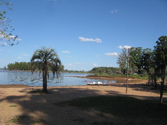 palmeras lago