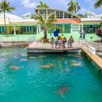Cayman Turtle Centre reopening this weekend