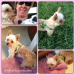 Whoops! We Did It Again! A Dog Rescuer Story