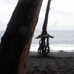 Roots above the earth, dancing in the water, drying in the breeze