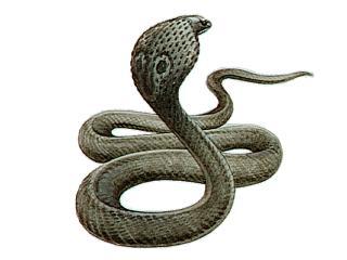 Cobra Drawing
