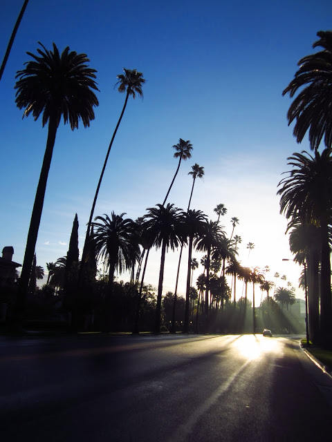 Palm trees and blue skies while driving in Los Angeles, CA