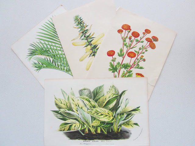 English botanical prints from the 1870s