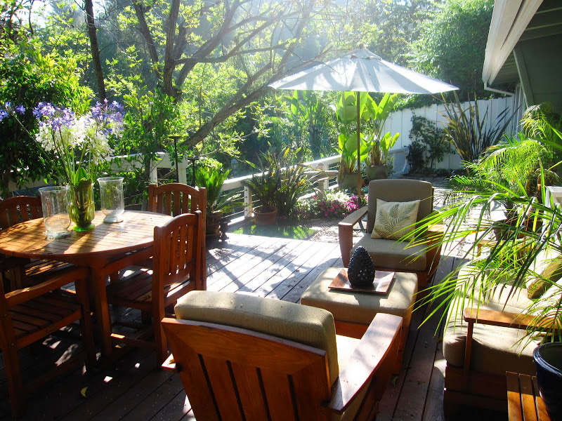Deck in the Hollywood Hills with teak furniture Palm trees, banana plants, Ficus, and Birds of Paradise