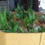 Pallet shipment
