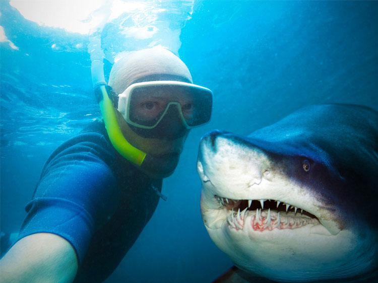 5 Jobs To Satisfy Your Inner Shark Lover   Monster com 5 jobs to satisfy your inner shark lover