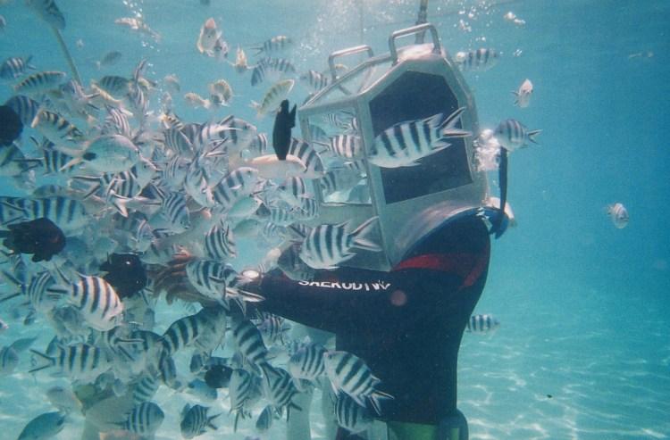 sea walking - things to do in the Caribbean   ©shankar s. / Flickr