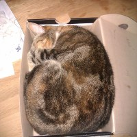 Unusual Cat Beds/Houses
