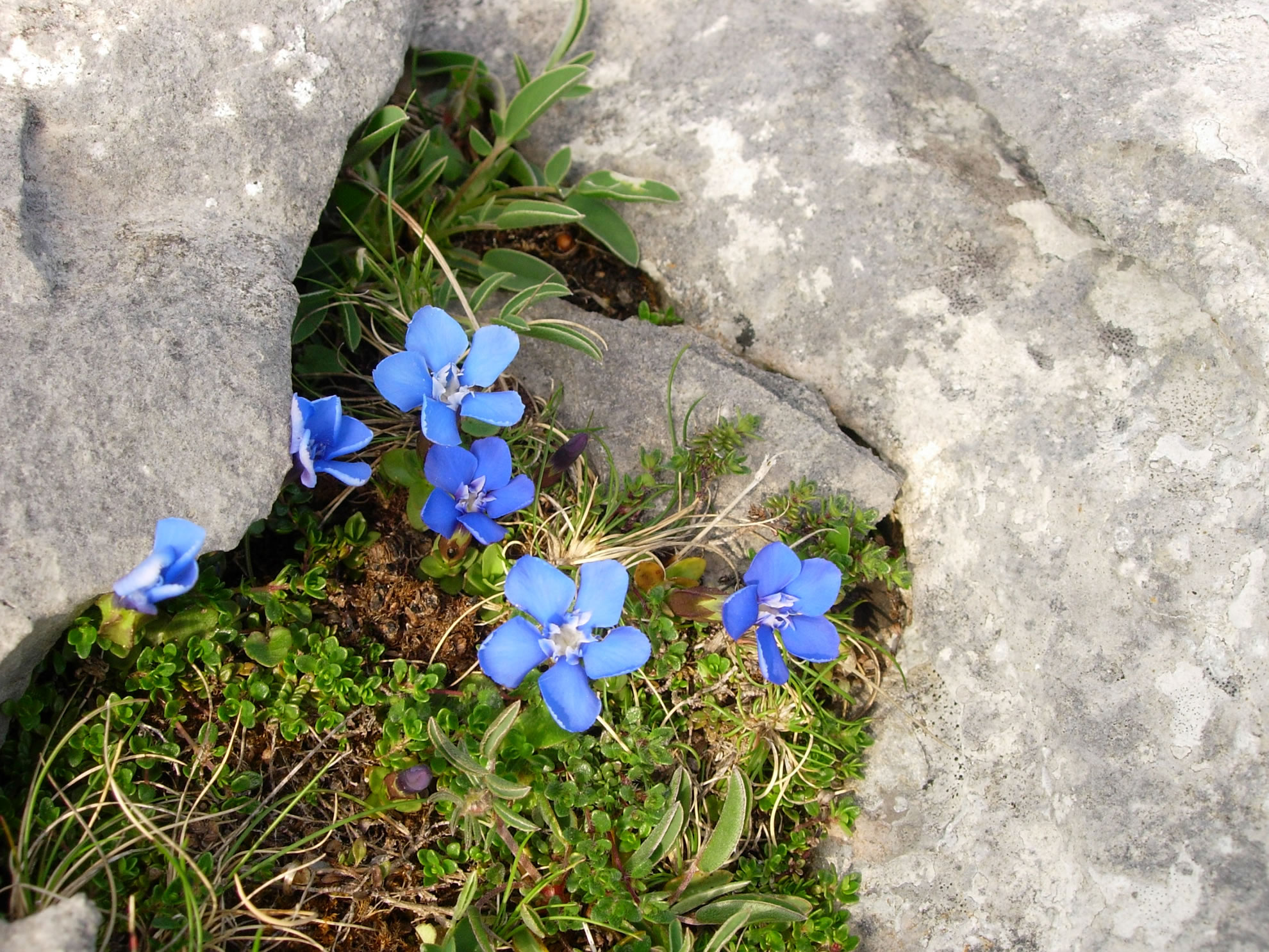Inis Meain - Flowers