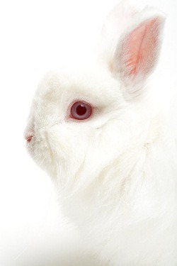 china-and-animal-testing