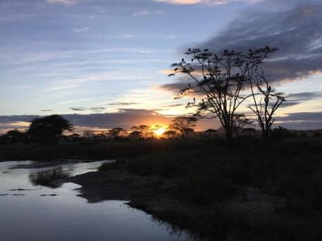 storks roosting at sunset