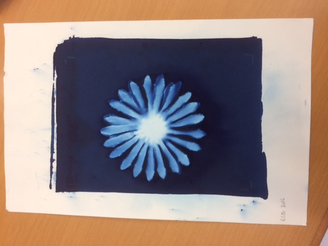 A cyanotype created with a flower picked on a hike
