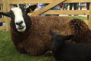 Macabre SU Petting Zoo Fails to Reduce Anxiety