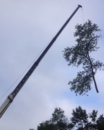 Crane used during tree & stump removal