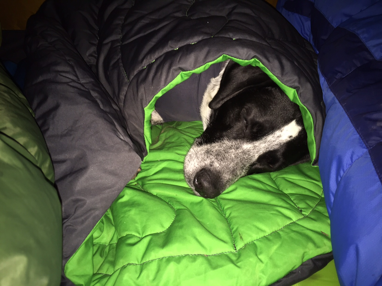 Fullsize Of Dog Sleeping Bag
