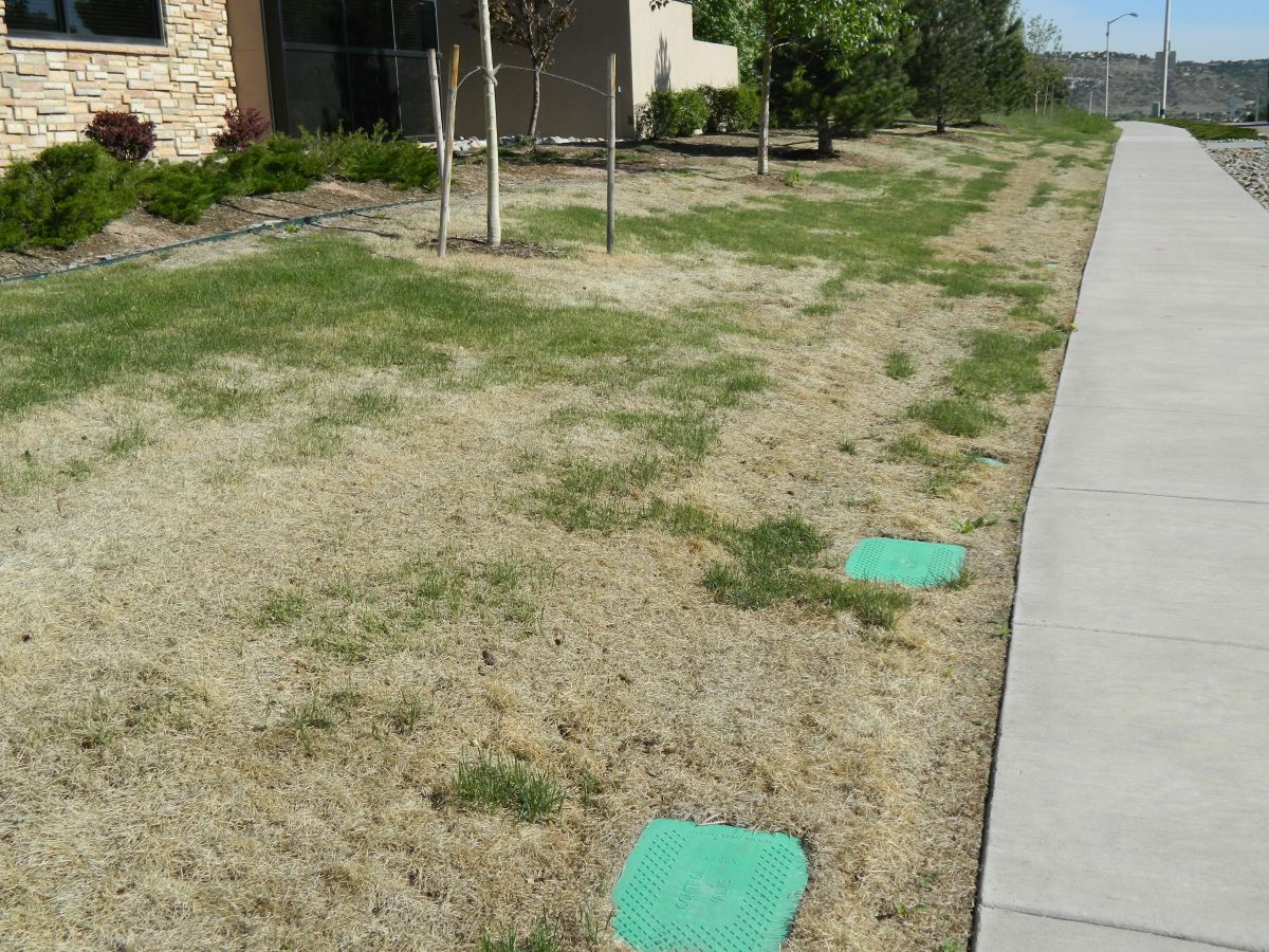 Is Your Brown Lawn Dead or Dormant?