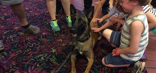 19184247882_55e11d6345_service-dog