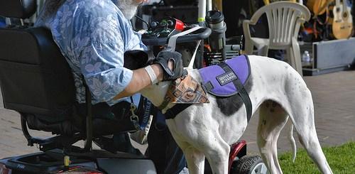 15441512995_b02d07bee5_service-dog