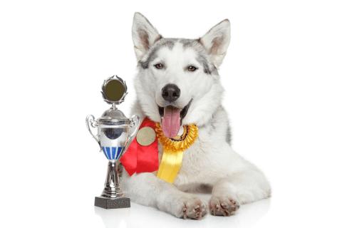 Buyagift's Next Pet model
